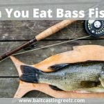 Can You Eat Bass Fish? (Explained For Bass Lovers)