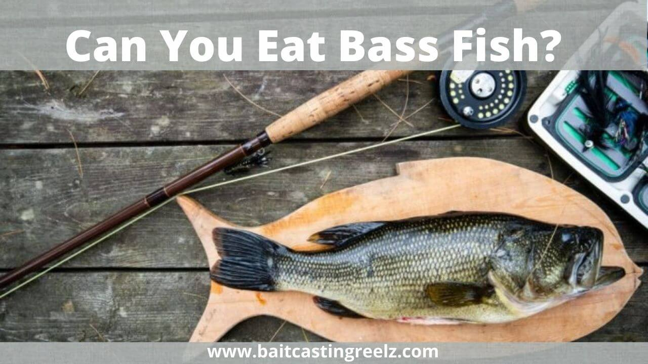 Can You Eat Bass Fish
