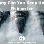 How Long Can You Keep Ungutted Fish on Ice Before They Spoil