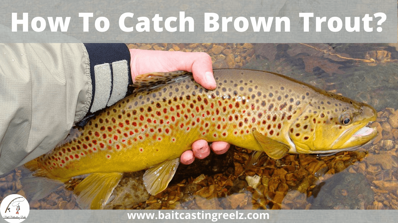 How To Catch Brown Trout?